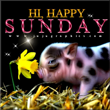 Hi happy Sunday