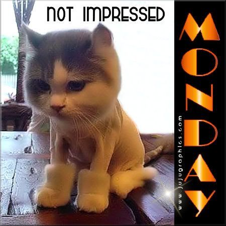 Monday not impressed